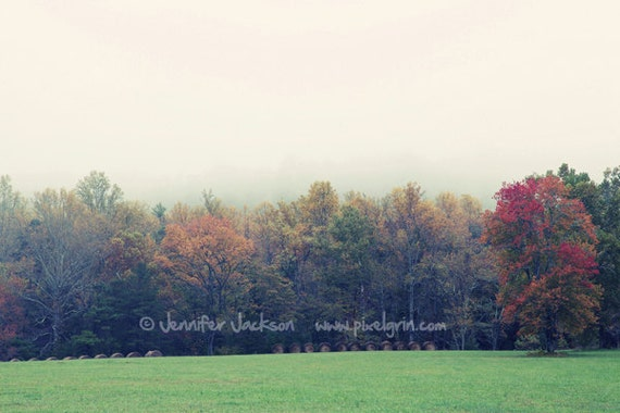 Landscape Photography, Southern Charm, Nature, 20 x 30 Foggy Fall Colored Trees, Nature Photography, Tennessee Smoky Mountains