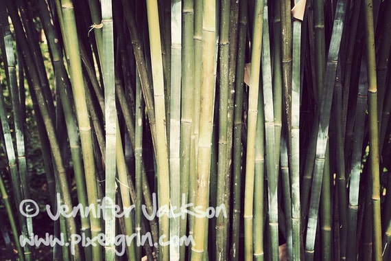 Nature Photography, Bamboo, Green Decor, Calming & Strength  - Great for Yoga Studio Decor or Meditation Room 20 x 30 inches