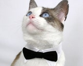 RESERVED For sturnsfrost ONLY - Black Pet Bow Tie (L)