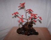 Red Coral Dreaming Tree