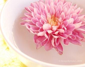 LONGING, Pink Flower in Bowl 8x10, Fine Art Photo Print