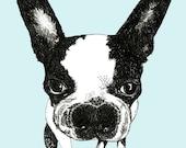 Boston Terrier - Dog Art Print