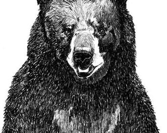 Black Bear Art  - Great Big Bear Illustration