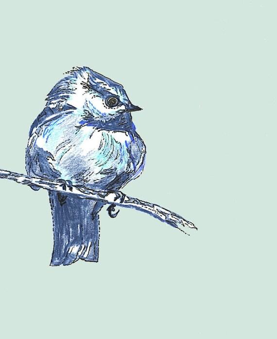 New Blue Bird