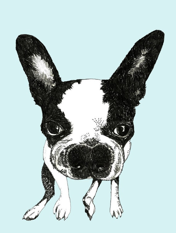 Boston Terrier - Dog Art Print