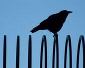 Barry Park Bird Silhouette-Photo Print