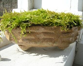 Hand Built Windowsill Moss Pot