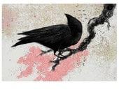 Spring Crow Cherry Blossoms