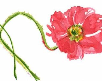 Curtsy Poppy - original painting