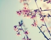 Delicate Spring Photo Nature Photography Tree Blue Sky Pink Cherry Blossoms Print Robin's Egg Blue Nursery Feminine Art Branches Sky Photo