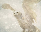 Owl Photograph, Surreal Photograph, Harry Potter Nursery, Rustic Home Decor, Owl Art, Winter Decor, Snowy Owl Photo, Hedwig, Whimsical Art