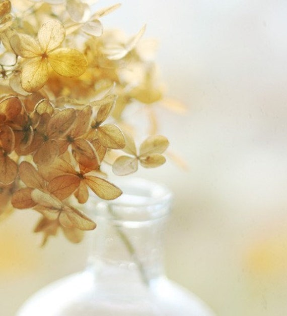 Still Life Photography, Hydrangea Photo, Gold, Hydrangea, Flower Photography, Still Life, Warm Tones, Autumn, Flower Petals, Home Wall Art