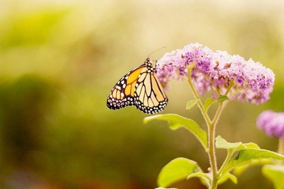 Bold, Colorful, Nature Photo, Butterfly Photo, Butterfly Print, Insect Photo, Bug Photo, Nature Photography, Nature, Green, Pink, Woodland