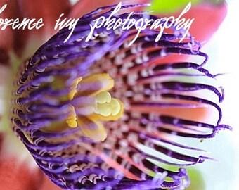 Passion Flower Fine Art Photography Autumn