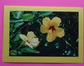Yellow Hibiscus - 4x6 photo on a 5x7 notecard