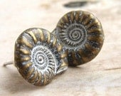 Nautilus Shell Stud earrings, shell post earrings, metal studs natural history shell stud earrings