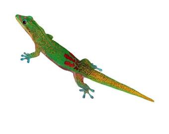 Gecko Print 8x10