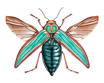 Golden Jewel Beetle Print