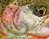 Cutthroat Trout Limited Edition Print