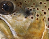 Brown Trout Limited Edition Print