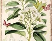 Antique Floral Correspondence Card no. 2