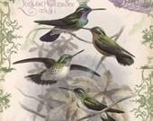 Vintage Birds Correspondence Cards no. 4