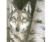 The Night Watch -5 Blank notecards of original charcoal drawing