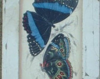 Butterfly Group Print Recycled Wood Frame SBF05