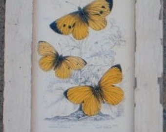 Butterfly Group Print Recycled Wood Frame SBF07
