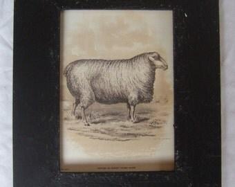 Farm Animal Sheep Print Reclaimed  Wood Frame  SHP5