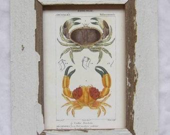 Coastal Crustacean Wildlife Print Recycled Wood Frame  CR4