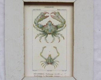 Coastal Crustacean Wildlife Print Recycled Wood Frame  CR 8