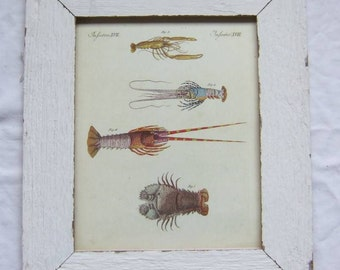 Coastal Crustacean Wildlife Print Recycled Wood Frame
