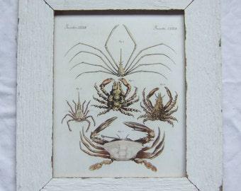Coastal Crustacean Wildlife Print Recycled Wood Frame
