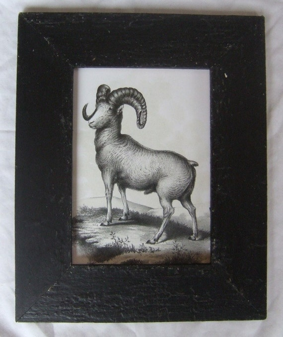 Long Horn Mountain Wild Sheep Print Recycled Wood Frame SHP7