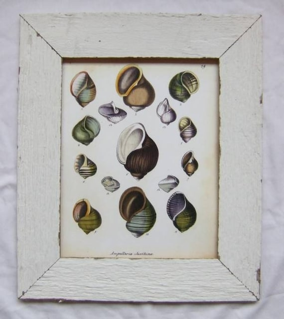 Coastal Seashell Print Recycled Wood Frame