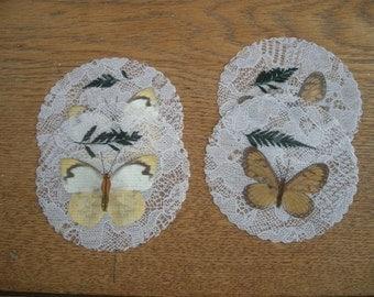 Natural Butterfly Specimen Coaster Set of Ten