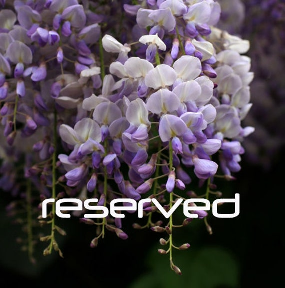 Reserved for Istine