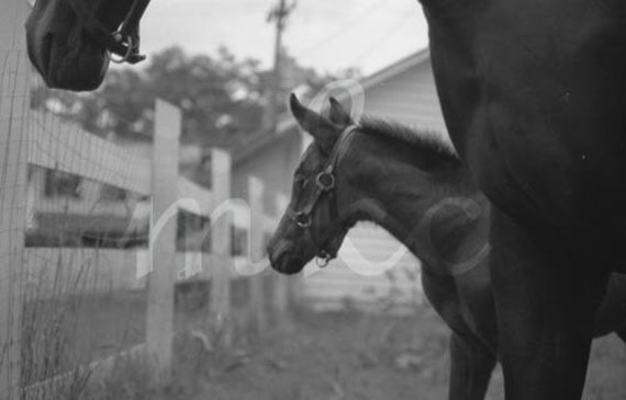 Watchful - Black White Grey Horses Mare Foal Original Fine Art Horses Photograph - FREE SHIPPING