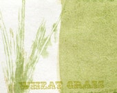 Wheat Grass Postcard