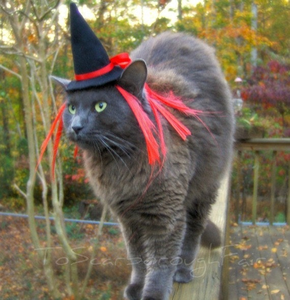 Cat Costume - Witch Hat - Garnet Red Cat Costume