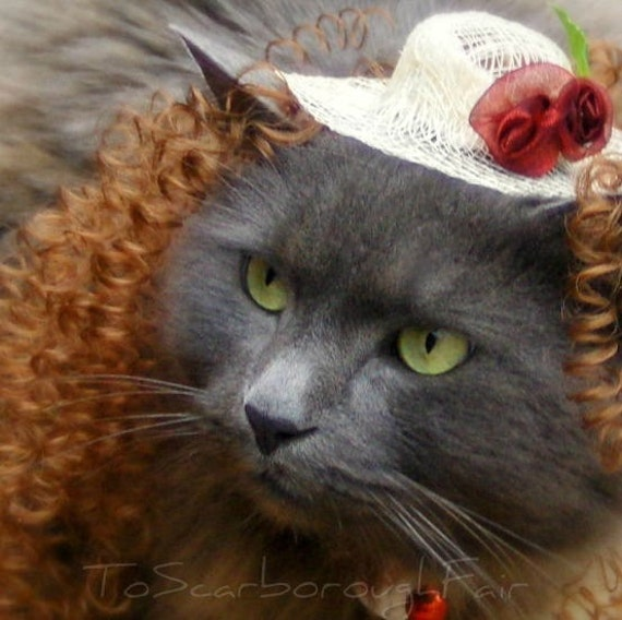 Belle of the Ball Kitty Photo Prop - Spring Hat with Wig