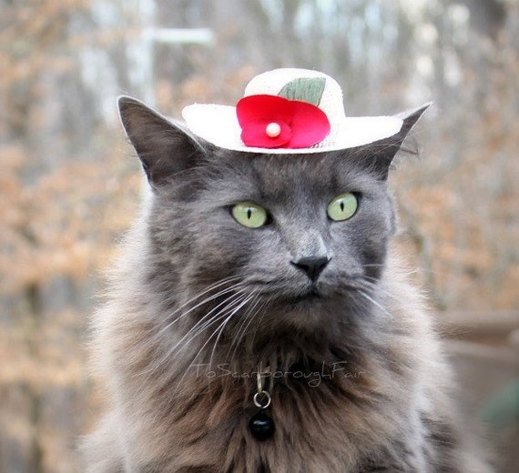 Hat for Cat - Cat Bonnet - Pet Bonnet