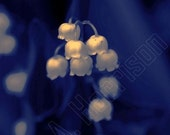 8bf. Lily of the Valley -  Abstract Art Photography - 10.5 x 8