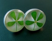 REAL 4 Leaf Clover Earrings - round with White background - Lucky little Irish beauties, good luck gift, graduation, shamrock, plugs, plant