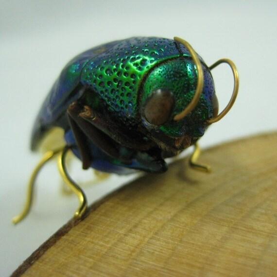 Real Jewel Beetle Pin - real bug made into wearable art