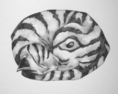 """Sleeping cat art Original pen and ink drawing OOAK 9""""x12"""" Curled up and Cute"""