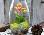 Woodland Orchid Terrarium