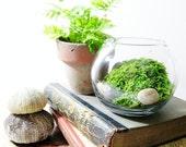 Live Plant Office Terrarium: Mini Indoor Desk Garden