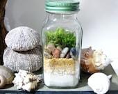Nature Study Terrarium: Layered Natural Elements in Spice Jar